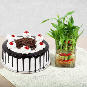 Lucky Bamboo With Black Forest Cake