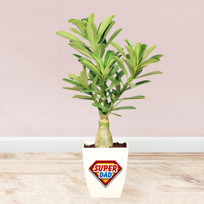 Desert Rose In Super Dad Customised Pot