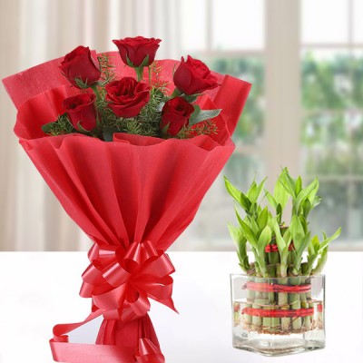Lucky Bamboo with Red Roses Combo
