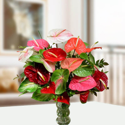 Mix Anthurium in a Vase